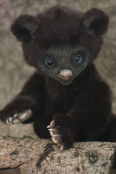 Bear14copy